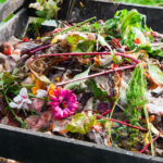 Composting at home: The Do's and Don'ts