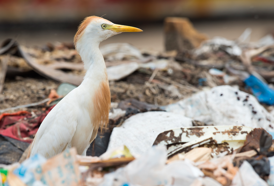 Facts about food waste and wildlife