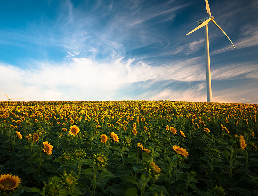 renewable energy facts windmill sunflowers