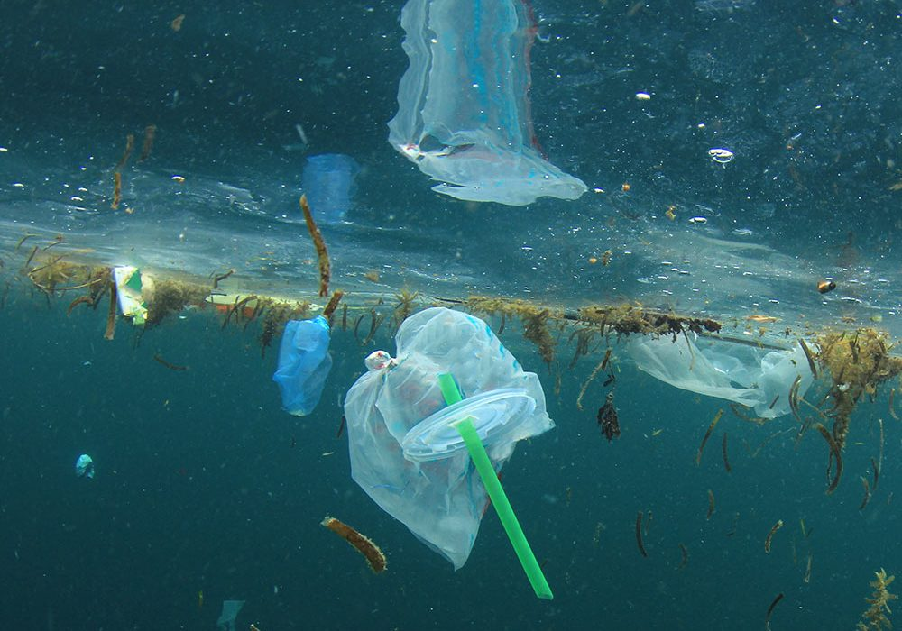 plastic straws harm the environment