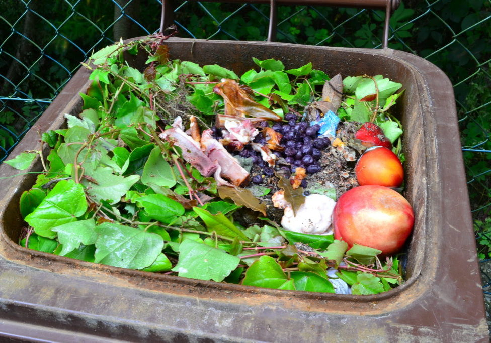 Picture of food and organic waste in a trash can